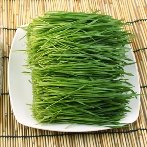 밀순/밀싹 (Wheat grass) 500g